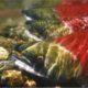 New bill threatens salmon, would weaken Endangered Species Act