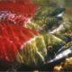 PRESS RELEASE: Court strikes down feds' salmon plan again