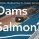 "EarthFix/OPB video, ""Dams or Salmon?"", never gives fish a chance"